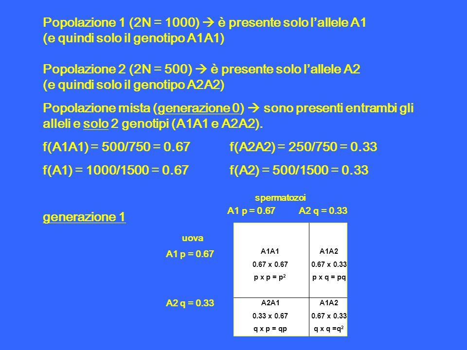 Popolazione 1 (2N = 1000) è presente solo lallele A1 (e quindi solo il genotipo A1A1) Popolazione 2 (2N = 500) è presente solo lallele A2 (e quindi so