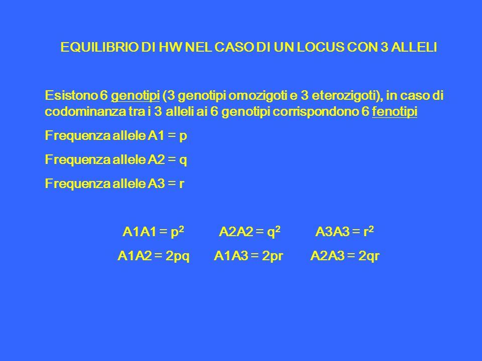 EQUILIBRIO DI HW NEL CASO DI UN LOCUS CON 3 ALLELI Esistono 6 genotipi (3 genotipi omozigoti e 3 eterozigoti), in caso di codominanza tra i 3 alleli a
