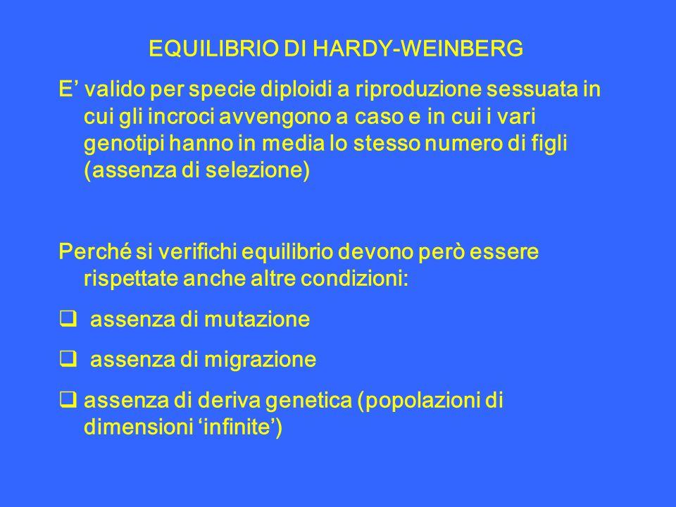 EQUILIBRIO DI HARDY-WEINBERG E valido per specie diploidi a riproduzione sessuata in cui gli incroci avvengono a caso e in cui i vari genotipi hanno i