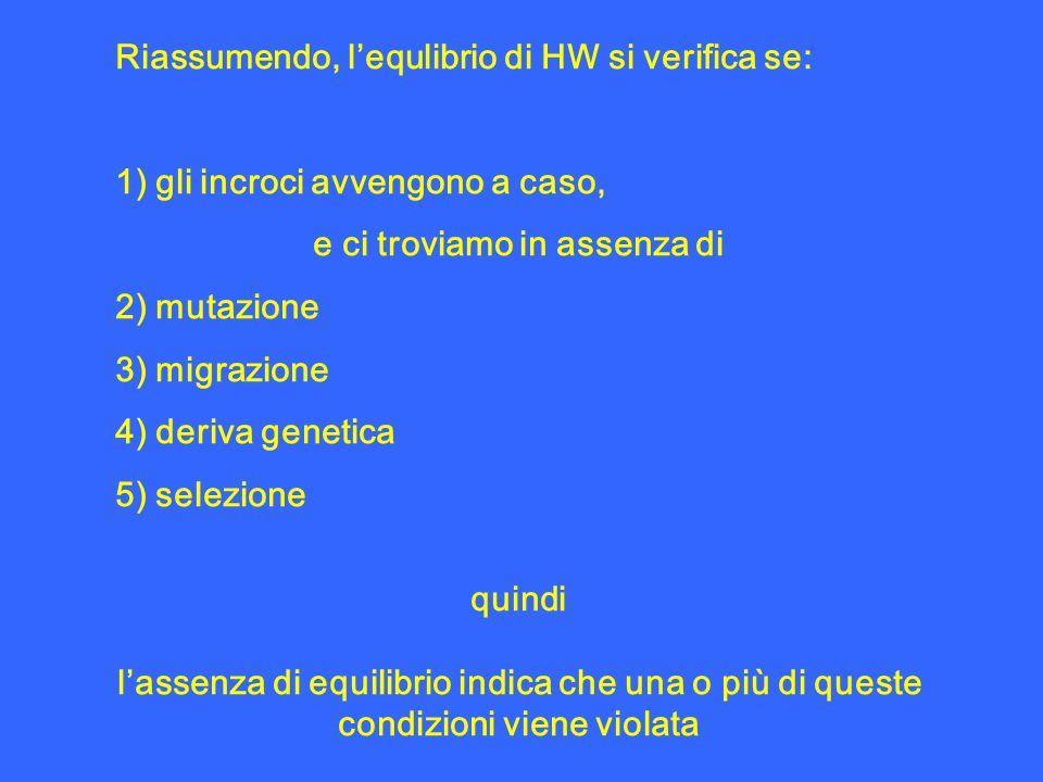 Riassumendo, lequlibrio di HW si verifica se: 1) gli incroci avvengono a caso, e ci troviamo in assenza di 2) mutazione 3) migrazione 4) deriva geneti