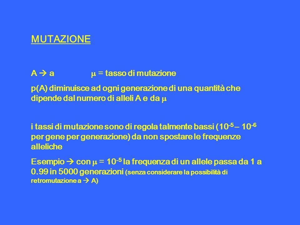 MUTAZIONE A a = tasso di mutazione p(A) diminuisce ad ogni generazione di una quantità che dipende dal numero di alleli A e da i tassi di mutazione so