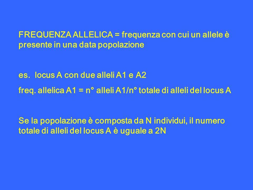 FREQUENZA ALLELICA = frequenza con cui un allele è presente in una data popolazione es. locus A con due alleli A1 e A2 freq. allelica A1 = n° alleli A