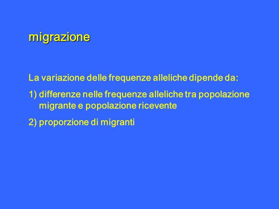 migrazione La variazione delle frequenze alleliche dipende da: 1)differenze nelle frequenze alleliche tra popolazione migrante e popolazione ricevente
