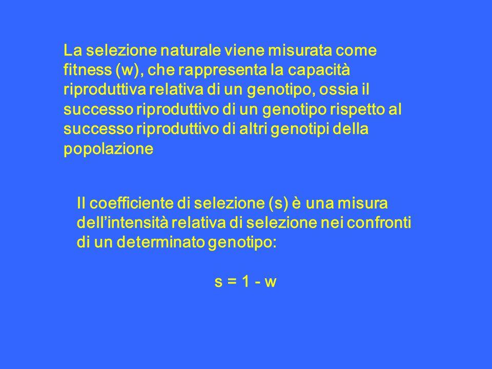 La selezione naturale viene misurata come fitness (w), che rappresenta la capacità riproduttiva relativa di un genotipo, ossia il successo riproduttiv