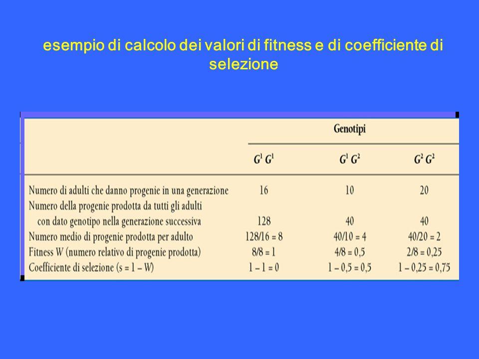 esempio di calcolo dei valori di fitness e di coefficiente di selezione
