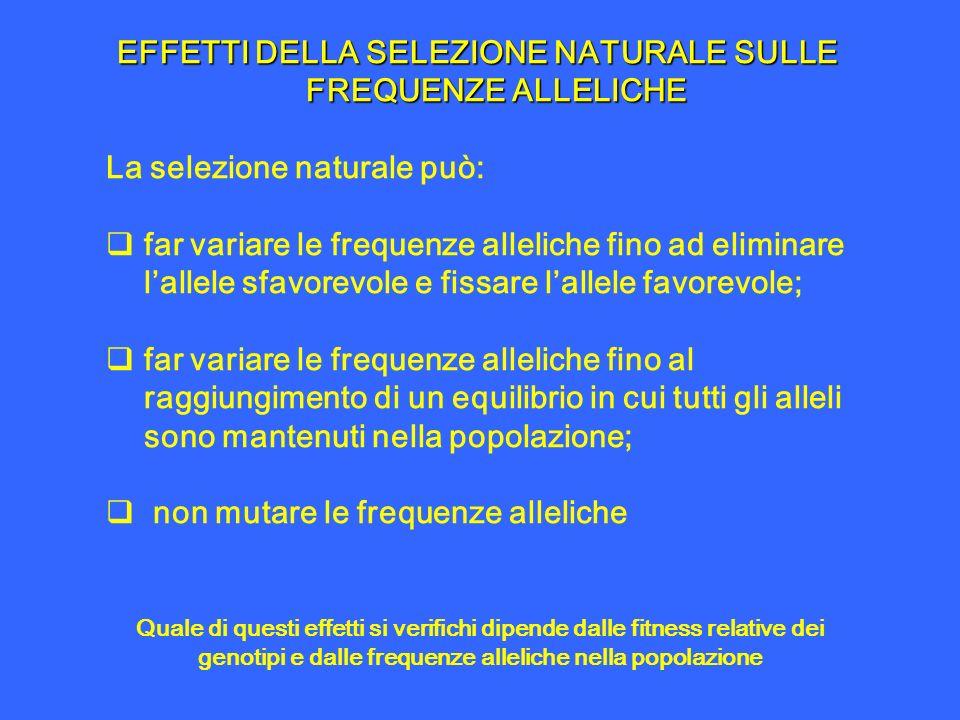 EFFETTI DELLA SELEZIONE NATURALE SULLE FREQUENZE ALLELICHE La selezione naturale può: far variare le frequenze alleliche fino ad eliminare lallele sfa