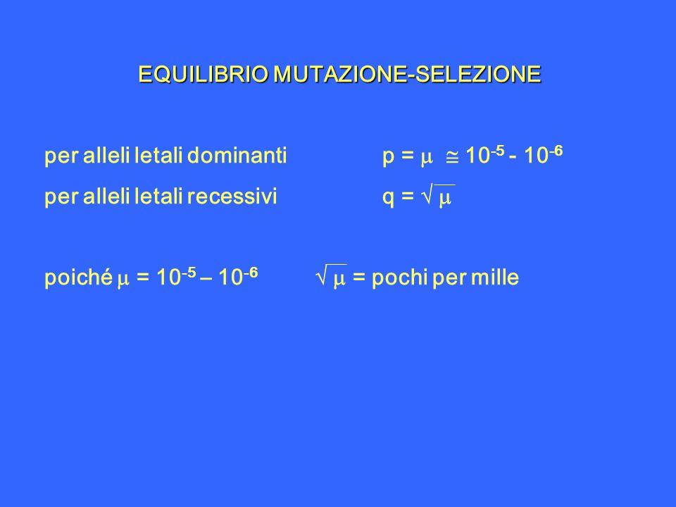 EQUILIBRIO MUTAZIONE-SELEZIONE per alleli letali dominantip = 10 -5 - 10 -6 per alleli letali recessiviq = poiché = 10 -5 – 10 -6 = pochi per mille