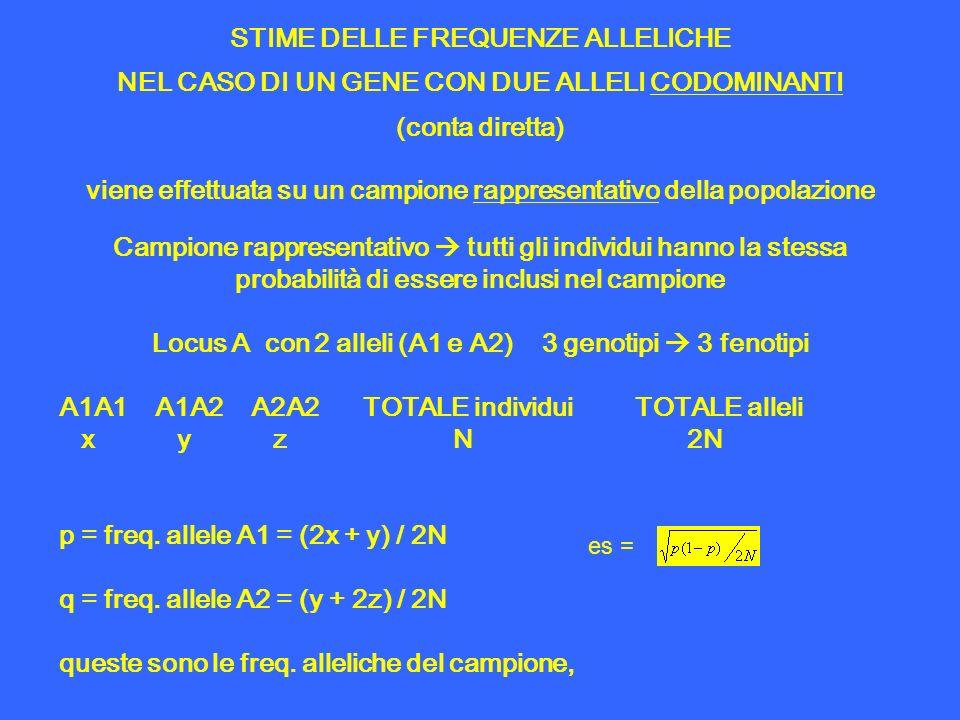 STIME DELLE FREQUENZE ALLELICHE NEL CASO DI UN GENE CON DUE ALLELI CODOMINANTI (conta diretta) viene effettuata su un campione rappresentativo della p