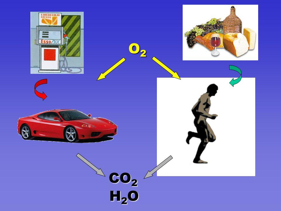 O2O2O2O2 CO 2 H2OH2OH2OH2O
