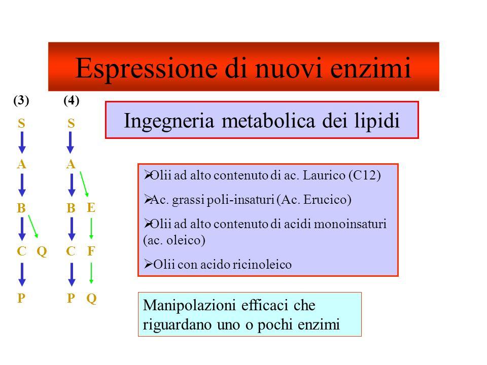Espressione di nuovi enzimi Manipolazioni efficaci che riguardano uno o pochi enzimi Olii ad alto contenuto di ac. Laurico (C12) Ac. grassi poli-insat