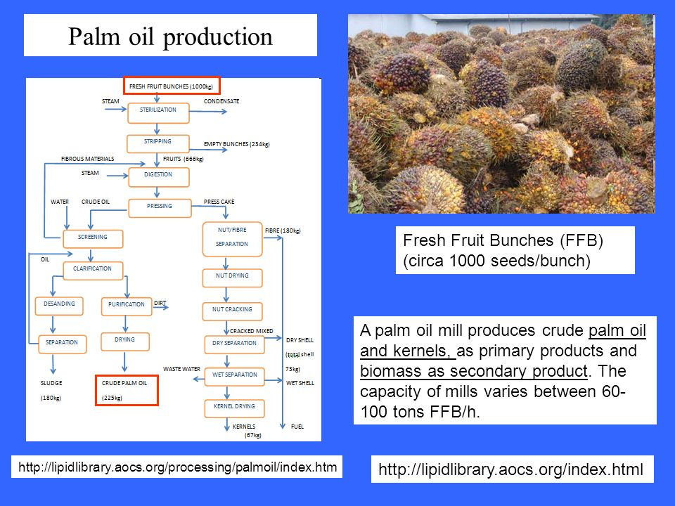 Fresh Fruit Bunches (FFB) (circa 1000 seeds/bunch) A palm oil mill produces crude palm oil and kernels, as primary products and biomass as secondary p