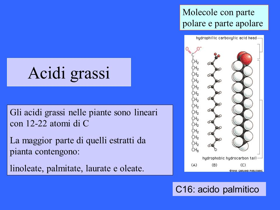 Acidi grassi inusuali Diverse di queste strutture sono usate come precursori nella chimica di sintesi (nylon…) Plants synthesize >200 different FA structures with attractive functional properties Esempio: 1-Octene is a high-demand feedstock with a global consumption of over half a million tons per year that is primarily used as a comonomer in the expanding production of linear low density polyethylene.