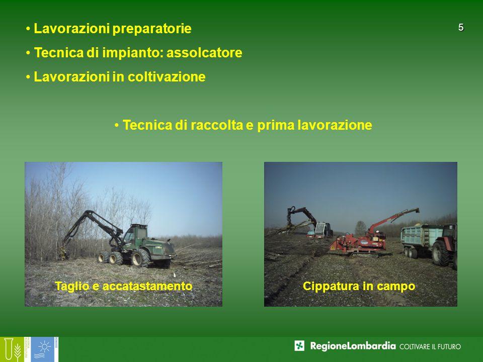 5 Lavorazioni preparatorie Tecnica di impianto: assolcatore Lavorazioni in coltivazione Tecnica di raccolta e prima lavorazione Taglio e accatastament