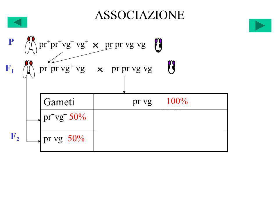 ASSOCIAZIONE F2F2 Gameti pr vg 100% pr + vg + 50%pr + pr vg + vg 25% +25% pr vg 50%pr pr vg vg 25% +25% pr + pr + vg + vg + pr pr vg vg P F 1 pr + pr