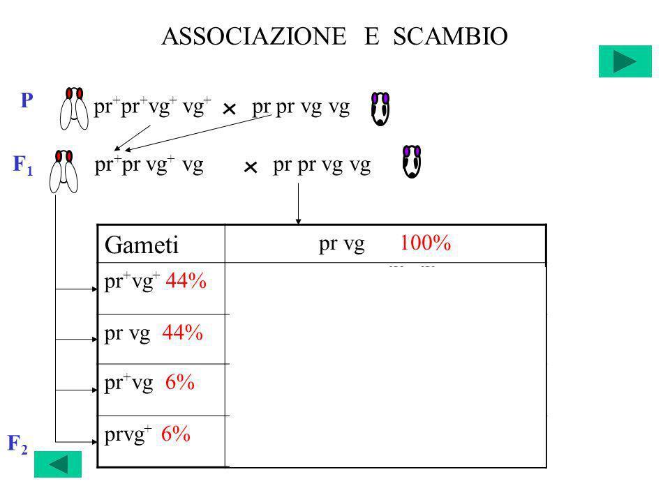 ASSOCIAZIONE E SCAMBIO F2F2 Gameti pr vg 100% pr + vg + 44%pr + pr vg + vg 22% +22% pr vg 44%pr pr vg vg 22% +22% pr + vg 6%pr + pr vg vg 3% +3% prvg