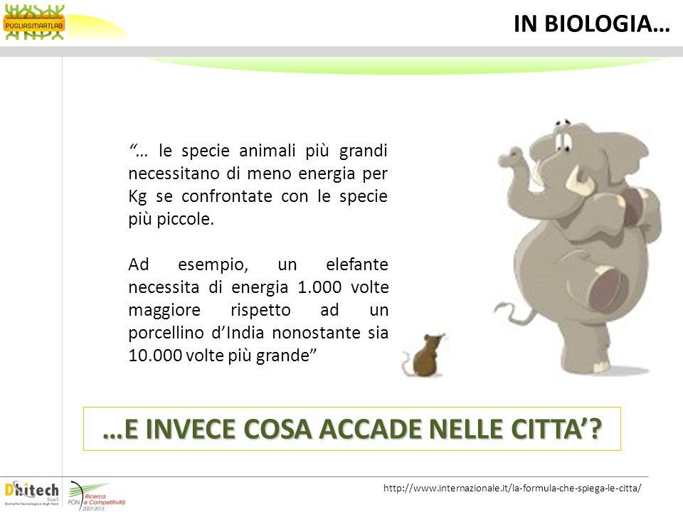 … le specie animali più grandi necessitano di meno energia per Kg se confrontate con le specie più piccole. Ad esempio, un elefante necessita di energ