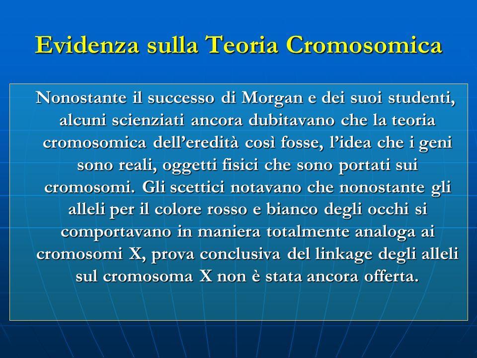 Evidenza sulla Teoria Cromosomica Nonostante il successo di Morgan e dei suoi studenti, alcuni scienziati ancora dubitavano che la teoria cromosomica