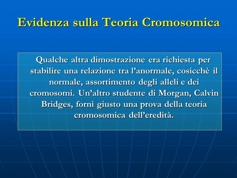 Qualche altra dimostrazione era richiesta per stabilire una relazione tra lanormale, cosicchè il normale, assortimento degli alleli e dei cromosomi. U