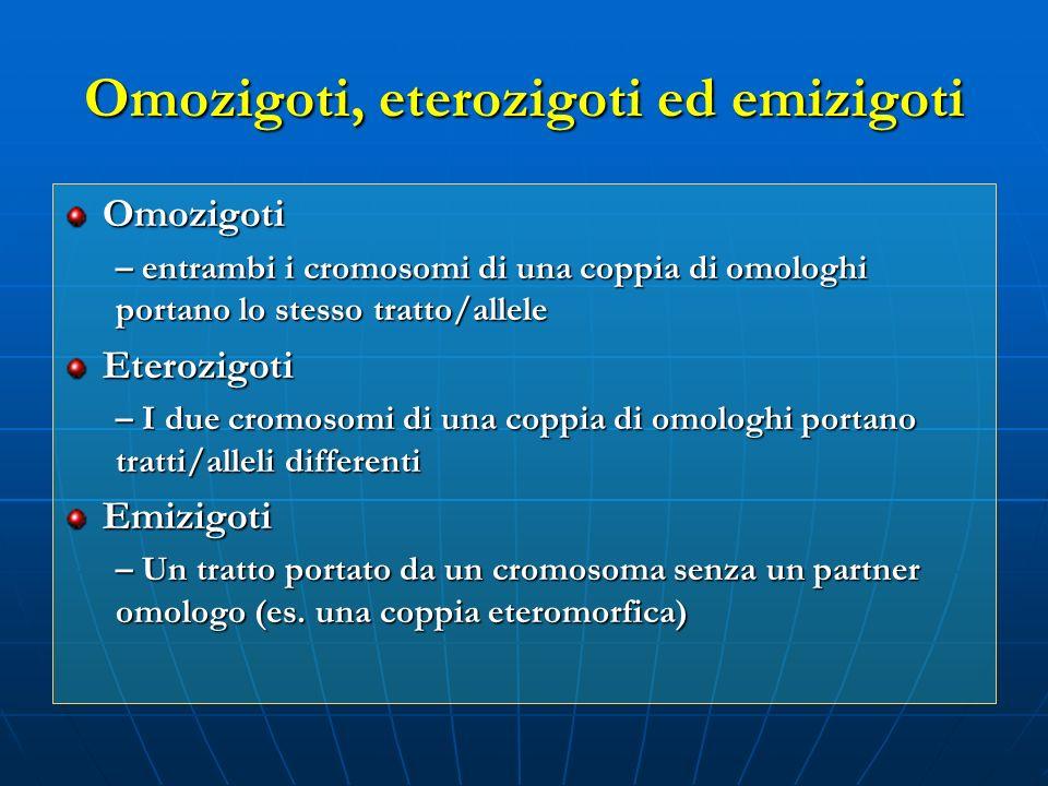 Omozigoti, eterozigoti ed emizigoti Omozigoti – entrambi i cromosomi di una coppia di omologhi portano lo stesso tratto/allele Eterozigoti – I due cro