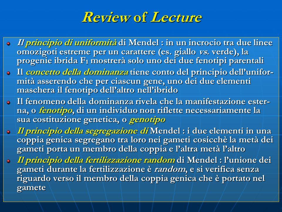 Review of Lecture Il principio di uniformità di Mendel : in un incrocio tra due linee omozigoti estreme per un carattere (es. giallo vs. verde), la pr