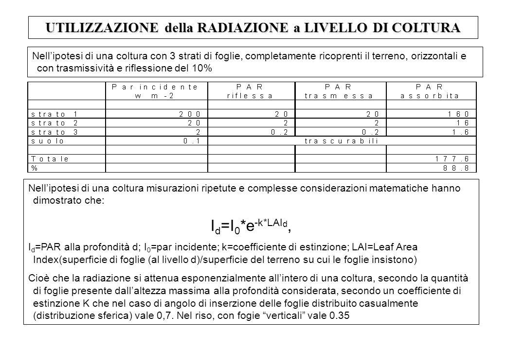 UTILIZZAZIONE della RADIAZIONE a LIVELLO DI COLTURA Nellipotesi di una coltura con 3 strati di foglie, completamente ricoprenti il terreno, orizzontali e con trasmissività e riflessione del 10% Nellipotesi di una coltura misurazioni ripetute e complesse considerazioni matematiche hanno dimostrato che: I d =I 0 *e -k*LAI d, I d =PAR alla profondità d; I 0 =par incidente; k=coefficiente di estinzione; LAI=Leaf Area Index(superficie di foglie (al livello d)/superficie del terreno su cui le foglie insistono) Cioè che la radiazione si attenua esponenzialmente allintero di una coltura, secondo la quantità di foglie presente dallaltezza massima alla profondità considerata, secondo un coefficiente di estinzione K che nel caso di angolo di inserzione delle foglie distribuito casualmente (distribuzione sferica) vale 0,7.
