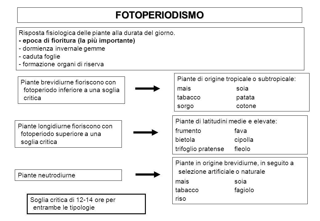 FOTOPERIODISMO Risposta fisiologica delle piante alla durata del giorno.