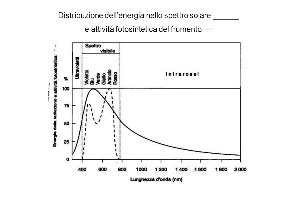 Distribuzione dellenergia nello spettro solare ______ e attività fotosintetica del frumento ----