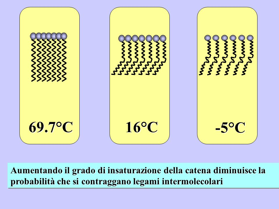 69.7°C16°C -5°C Aumentando il grado di insaturazione della catena diminuisce la probabilità che si contraggano legami intermolecolari