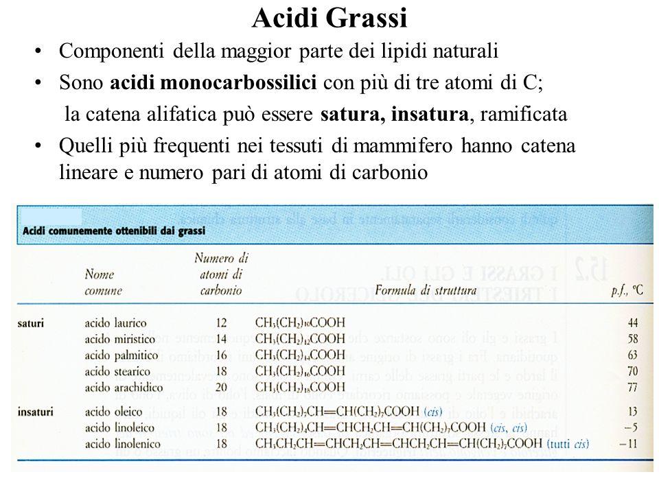 Acidi Grassi Componenti della maggior parte dei lipidi naturali Sono acidi monocarbossilici con più di tre atomi di C; la catena alifatica può essere