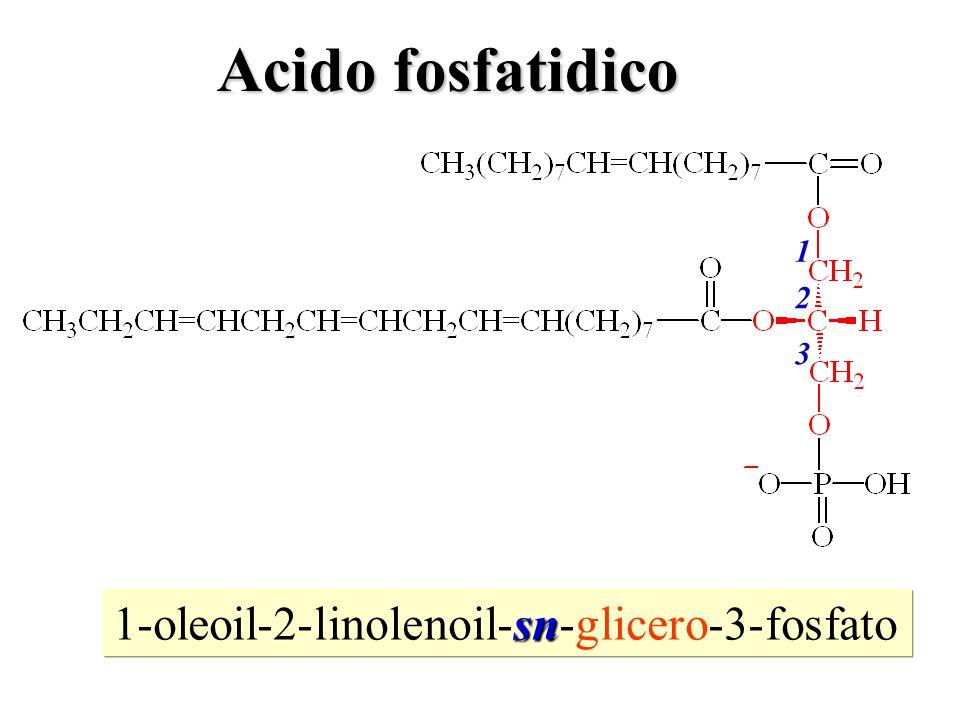 sn 1-oleoil-2-linolenoil-sn-glicero-3-fosfato 1 2 3 Acido fosfatidico