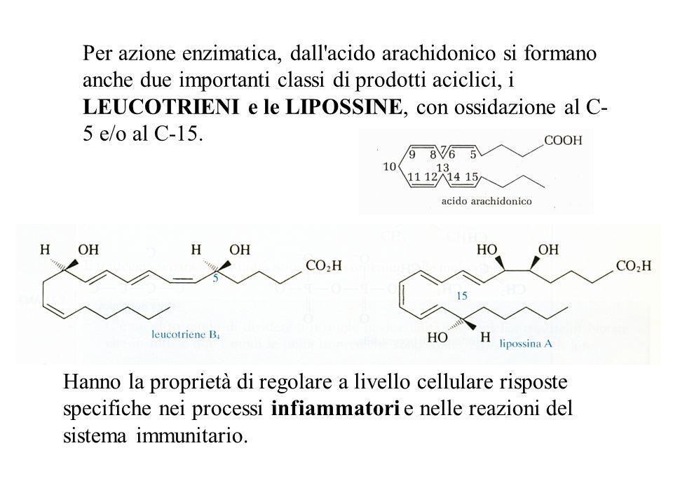 Per azione enzimatica, dall'acido arachidonico si formano anche due importanti classi di prodotti aciclici, i LEUCOTRIENI e le LIPOSSINE, con ossidazi