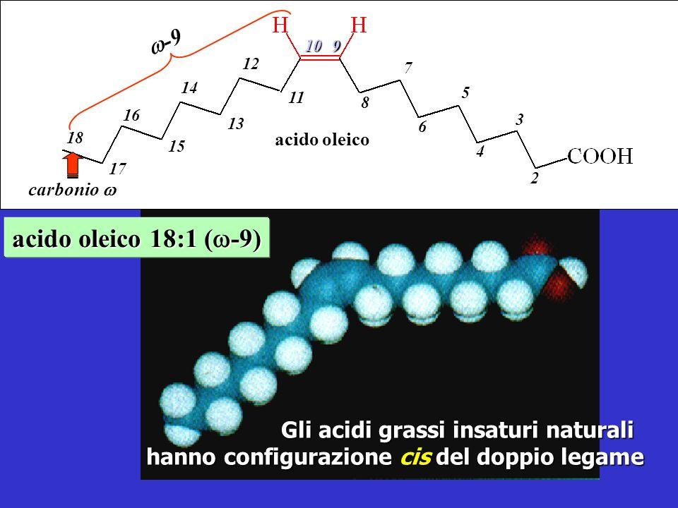 acido oleico 18:1 ( -9) Gli acidi grassi insaturi naturali hanno configurazione cis cis del doppio legame acido oleico -9 -9 2 4 6 8 3 5 7 9 10 11 13 15 17 12 14 16 18 carbonio carbonio