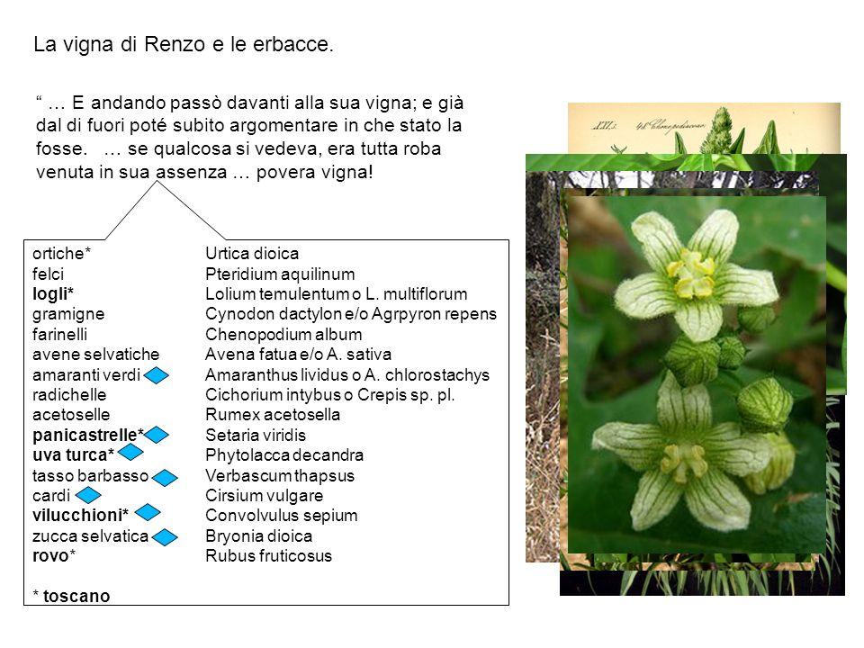 Ghisalberti F.– Il Manzoni gerogofilo e i suoi appunti inediti sulla nomenclatura botanica.
