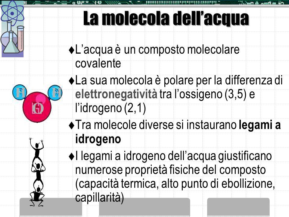 La molecola dellacqua Lacqua è un composto molecolare covalente La sua molecola è polare per la differenza di elettronegatività tra lossigeno (3,5) e lidrogeno (2,1) Tra molecole diverse si instaurano legami a idrogeno I legami a idrogeno dellacqua giustificano numerose proprietà fisiche del composto (capacità termica, alto punto di ebollizione, capillarità) O HH