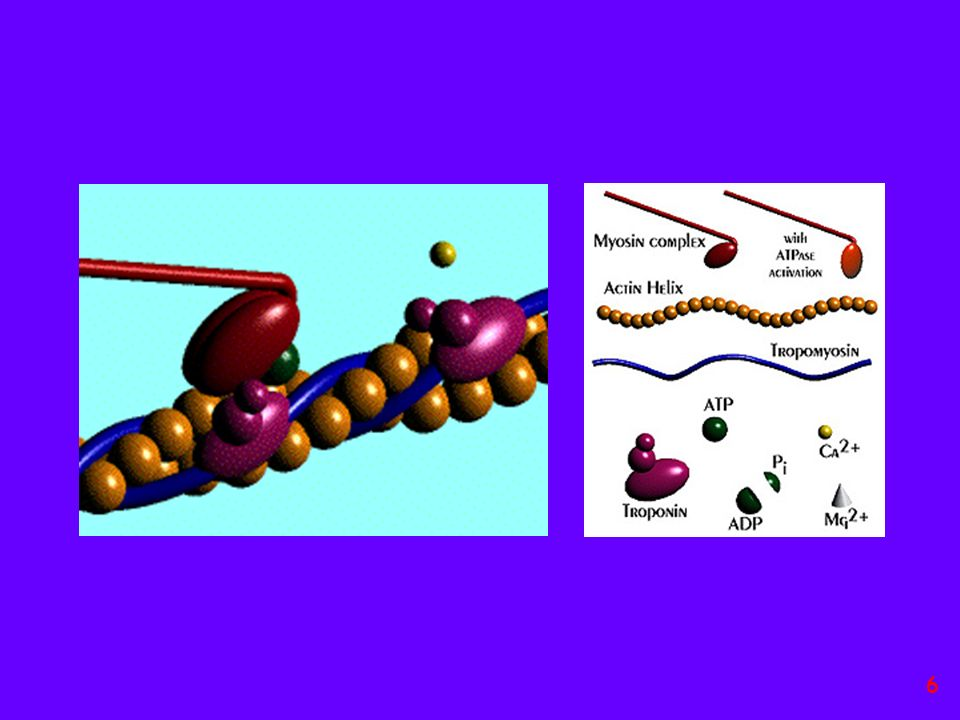 Streptomicina isolata da Attinomiceti (Actinobacteria) batteri Gram positivi 27