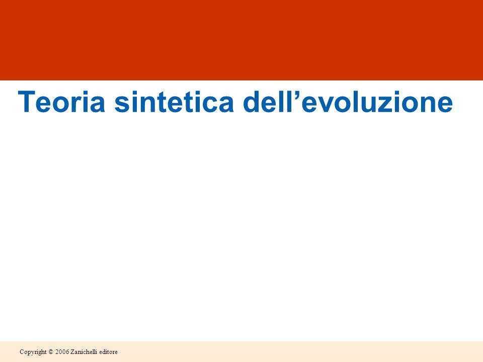 Copyright © 2006 Zanichelli editore Teoria sintetica dellevoluzione