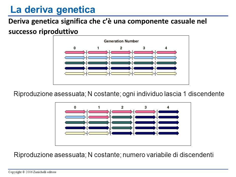 Copyright © 2006 Zanichelli editore Deriva genetica significa che cè una componente casuale nel successo riproduttivo Riproduzione asessuata; N costan