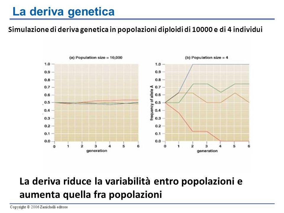 Copyright © 2006 Zanichelli editore Simulazione di deriva genetica in popolazioni diploidi di 10000 e di 4 individui La deriva riduce la variabilità e