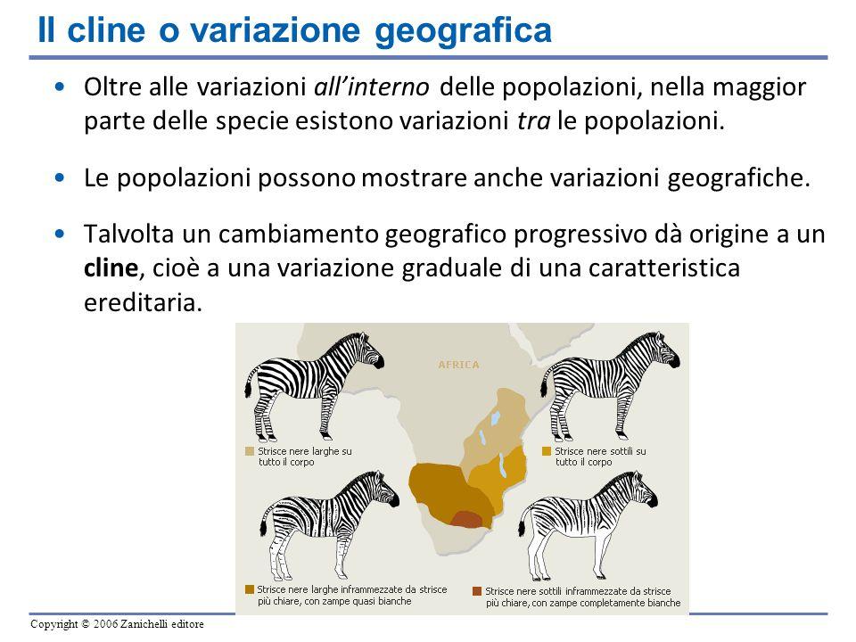Copyright © 2006 Zanichelli editore Oltre alle variazioni allinterno delle popolazioni, nella maggior parte delle specie esistono variazioni tra le po