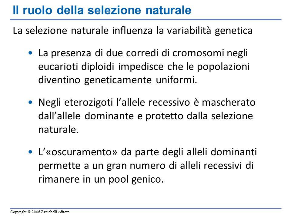 Copyright © 2006 Zanichelli editore La selezione naturale influenza la variabilità genetica La presenza di due corredi di cromosomi negli eucarioti di