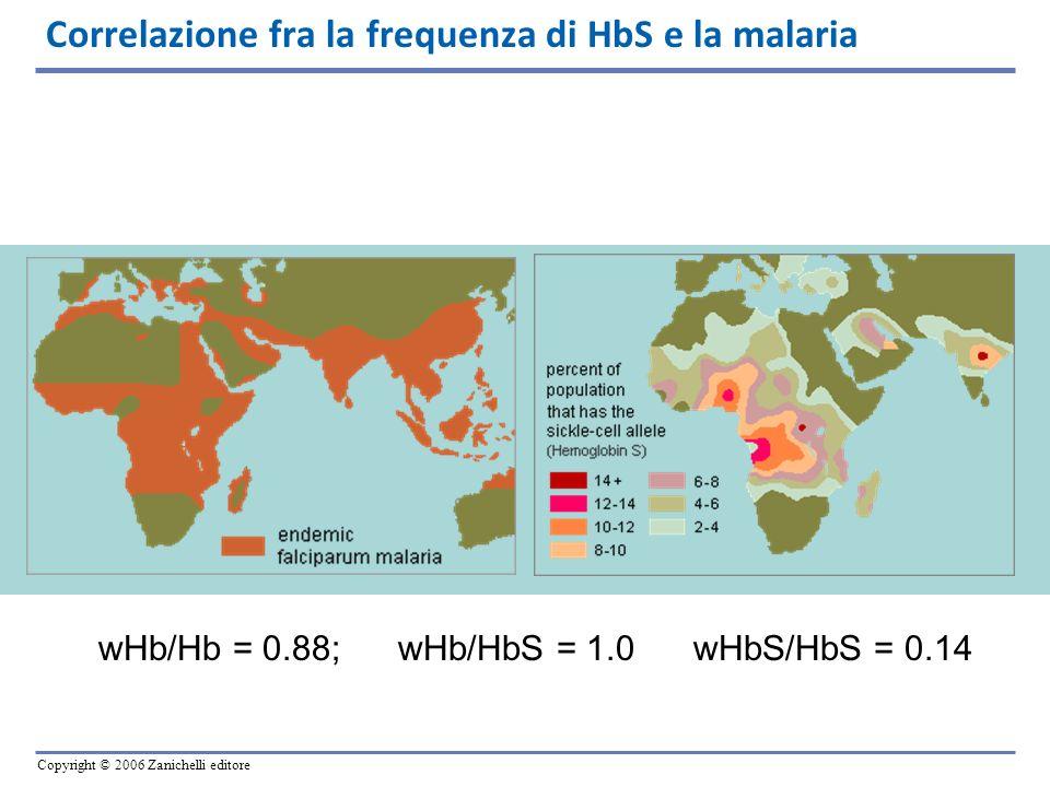 Copyright © 2006 Zanichelli editore Correlazione fra la frequenza di HbS e la malaria wHb/Hb = 0.88; wHb/HbS = 1.0 wHbS/HbS = 0.14
