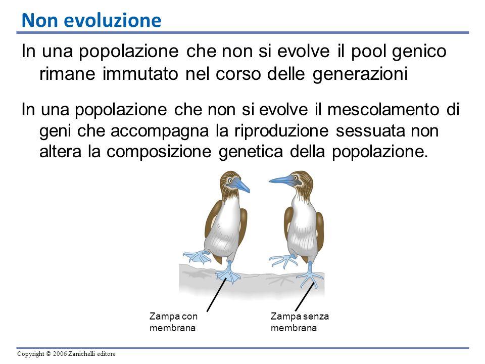 Copyright © 2006 Zanichelli editore In una popolazione che non si evolve il pool genico rimane immutato nel corso delle generazioni In una popolazione