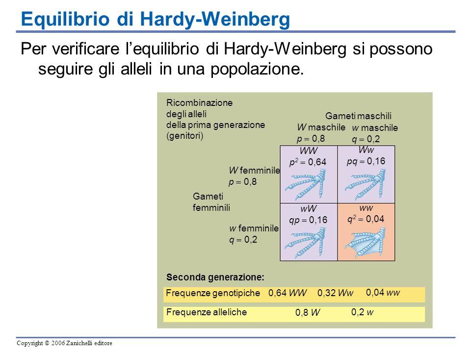 Copyright © 2006 Zanichelli editore Ricombinazione degli alleli della prima generazione (genitori) Gameti femminili Frequenze genotipiche Frequenze al