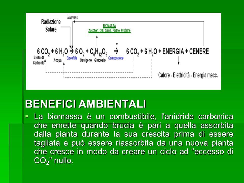 BENEFICI AMBIENTALI La biomassa è un combustibile, l'anidride carbonica che emette quando brucia è pari a quella assorbita dalla pianta durante la sua