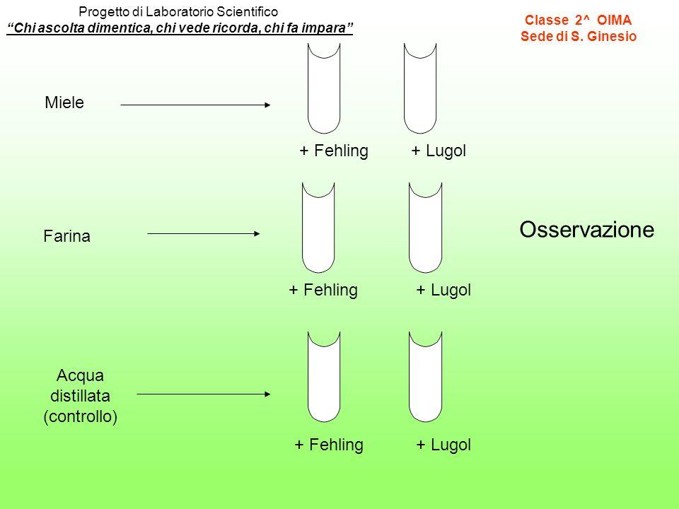Miele Farina Acqua distillata (controllo) + Fehling+ Lugol + Fehling+ Lugol + Fehling+ Lugol Chi ascolta dimentica, chi vede ricorda, chi fa impara Pr
