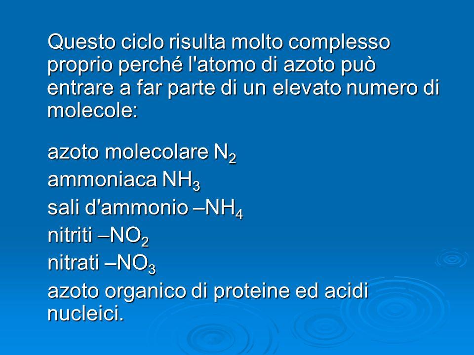 Questo ciclo risulta molto complesso proprio perché l'atomo di azoto può entrare a far parte di un elevato numero di molecole: azoto molecolare N 2 am