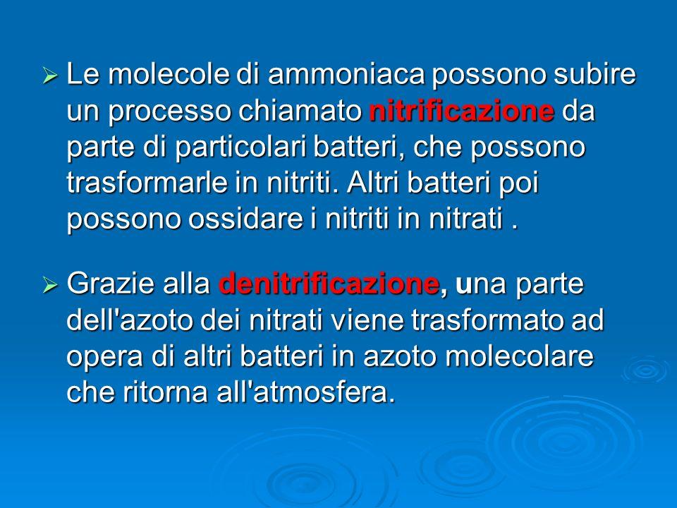 Le molecole di ammoniaca possono subire un processo chiamato nitrificazione da parte di particolari batteri, che possono trasformarle in nitriti. Altr