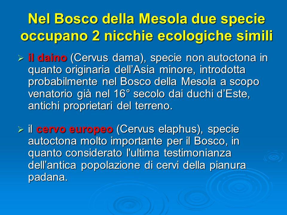 Nel Bosco della Mesola due specie occupano 2 nicchie ecologiche simili il daino (Cervus dama), specie non autoctona in quanto originaria dellAsia mino