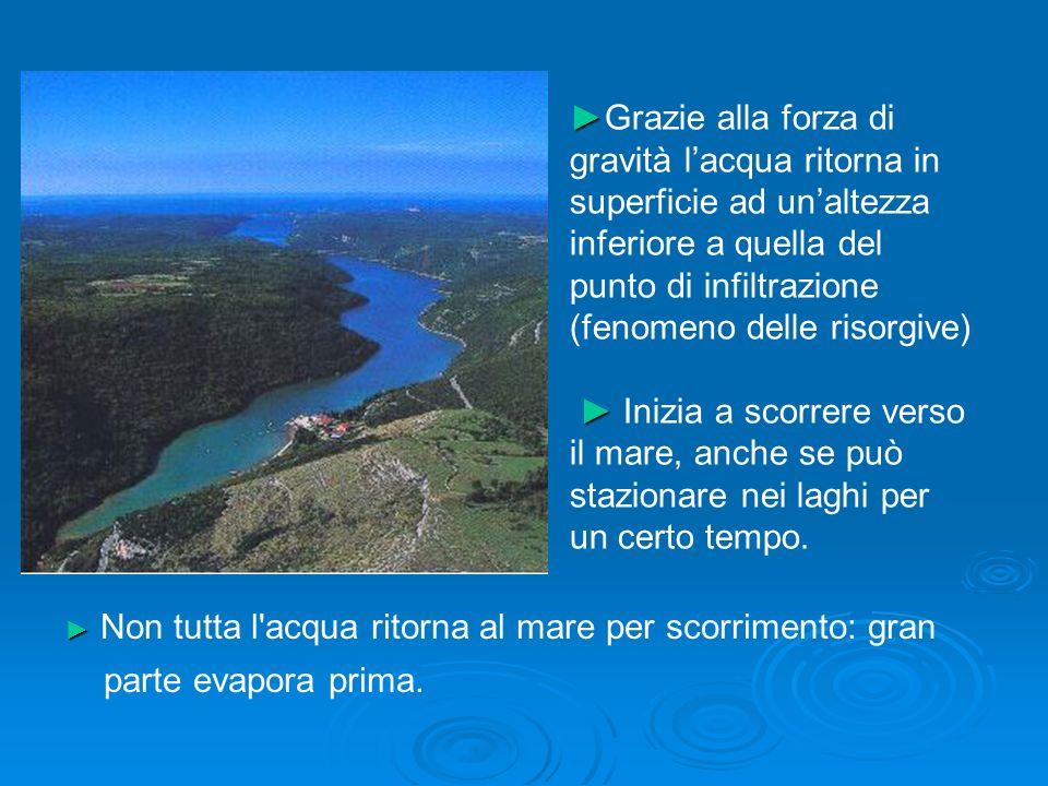 BIBLIOGRAFIA – ELENCO SITI INTERNET Eugene P.Odum: Ecologia - Zanichelli ed.