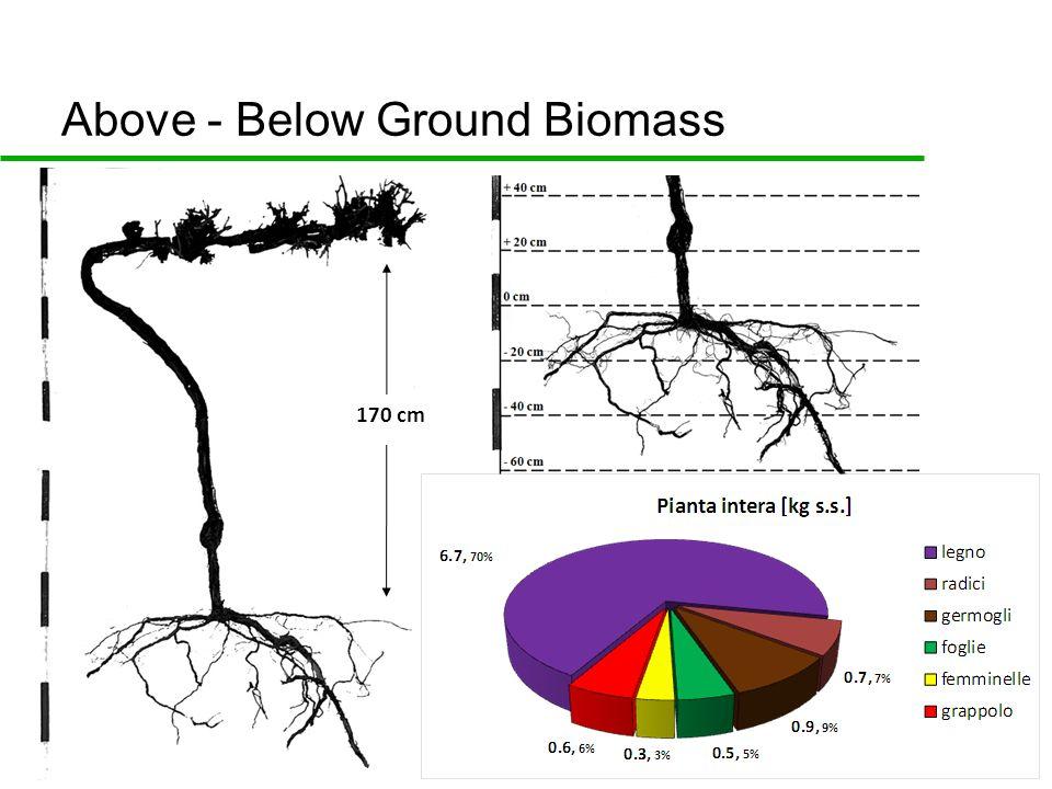170 cm Above - Below Ground Biomass